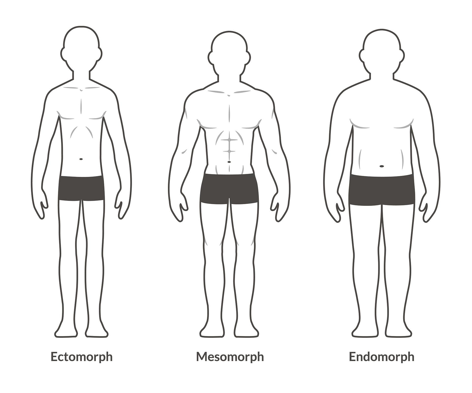 Saint Fitness Body Types